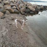 Gode hunde råd om vejr